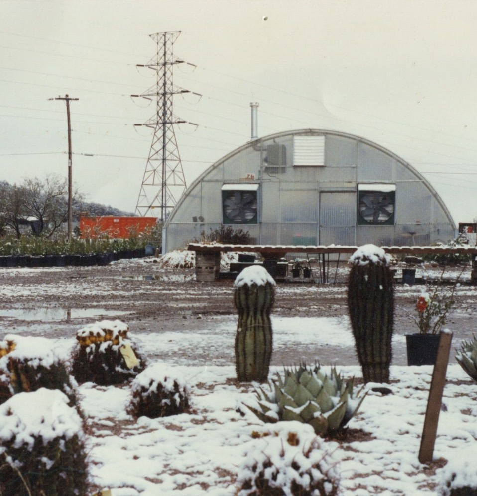 Snow covering the nursery back in the 1980's (note this is our main greenhouse when you first come in the nursery, times have changed)